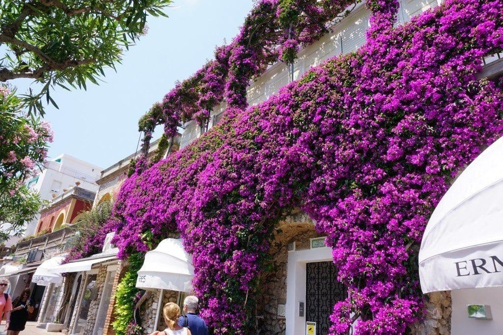 The Island Of Capri Italy Photo Ph Riday Global Munchkins