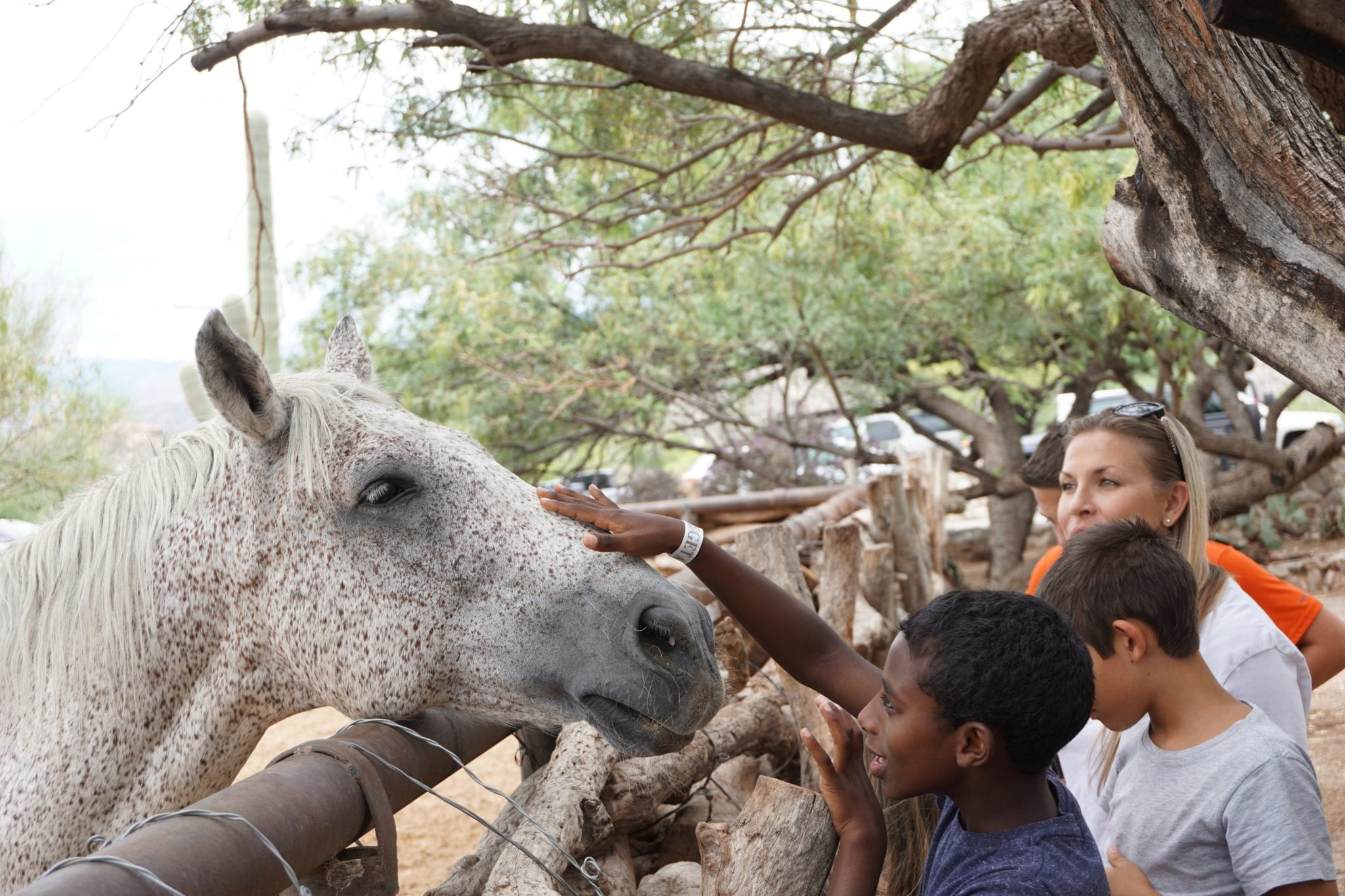 5 Reasons Tanque Verde Dude Ranch Makes A Great Family