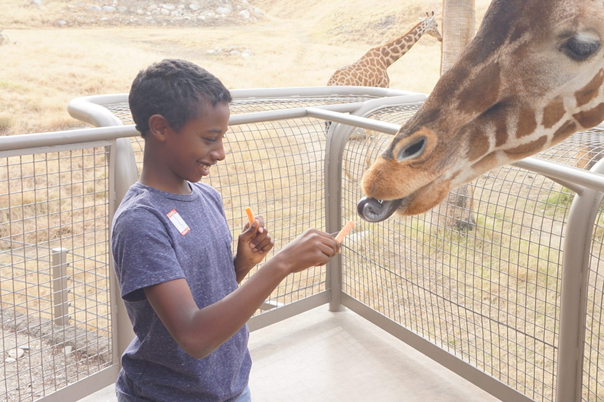 What to do in Palm Springs with Kids - Palm Springs Zoo