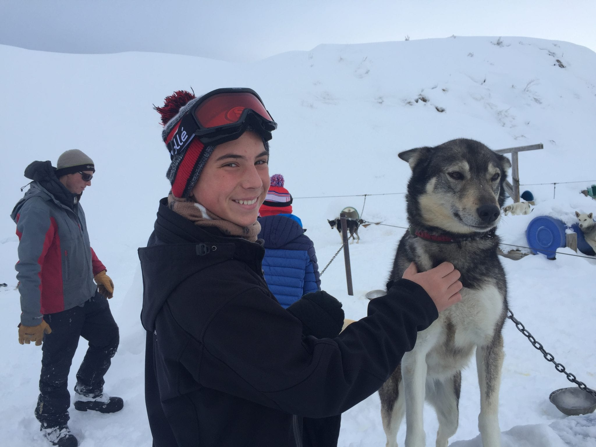 Alaskan Huskies Dog Sledding in CO | Global Munchkins