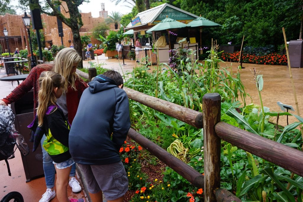 Kids looking at a Garden at Epcot's International Flower and Garden Festival | Global Munchkins