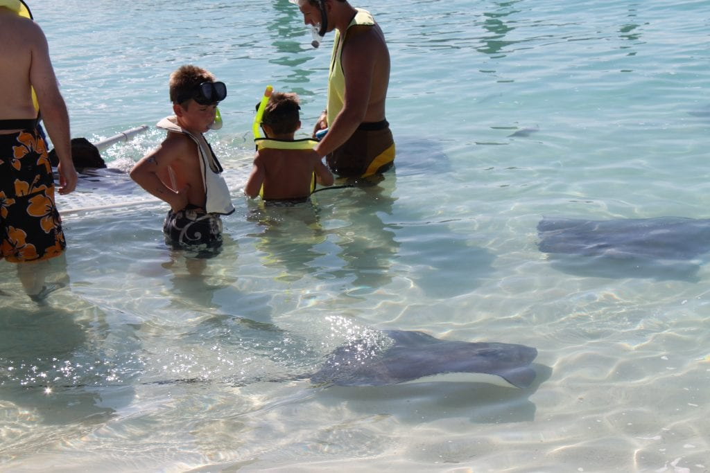 Ray experience on Castaway Cay   Global Munchkins