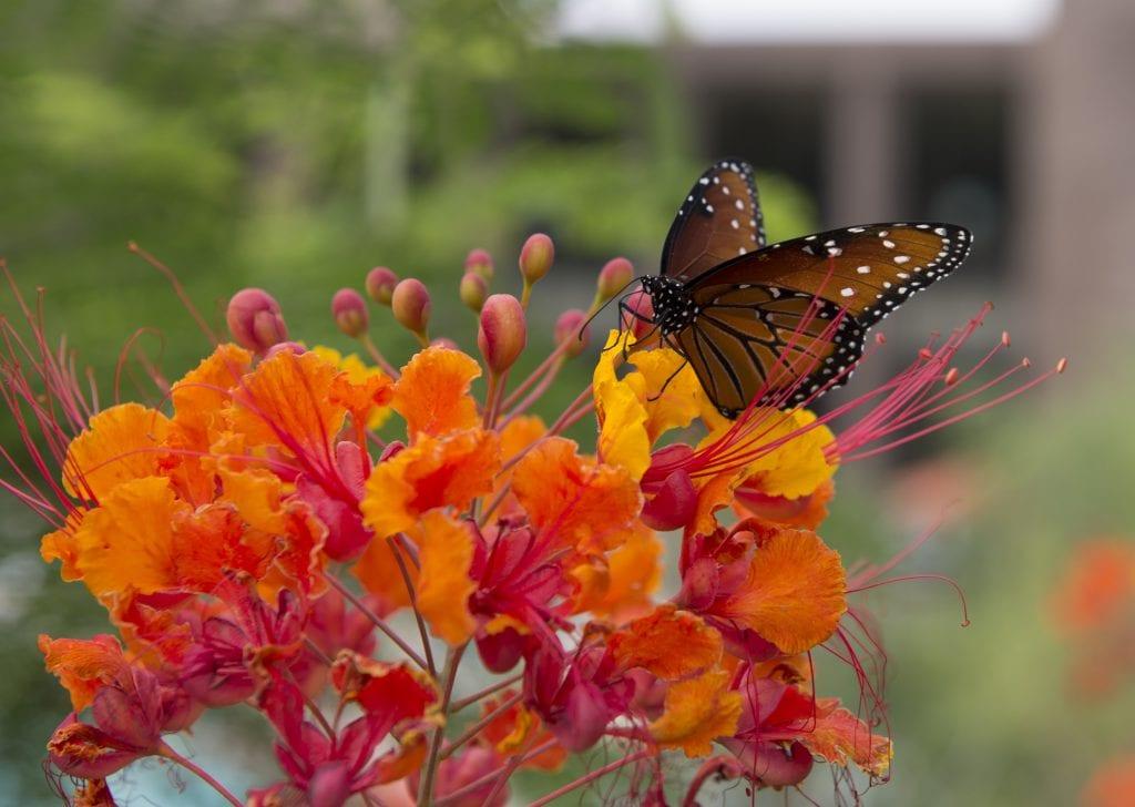 certified-butterfly-garden
