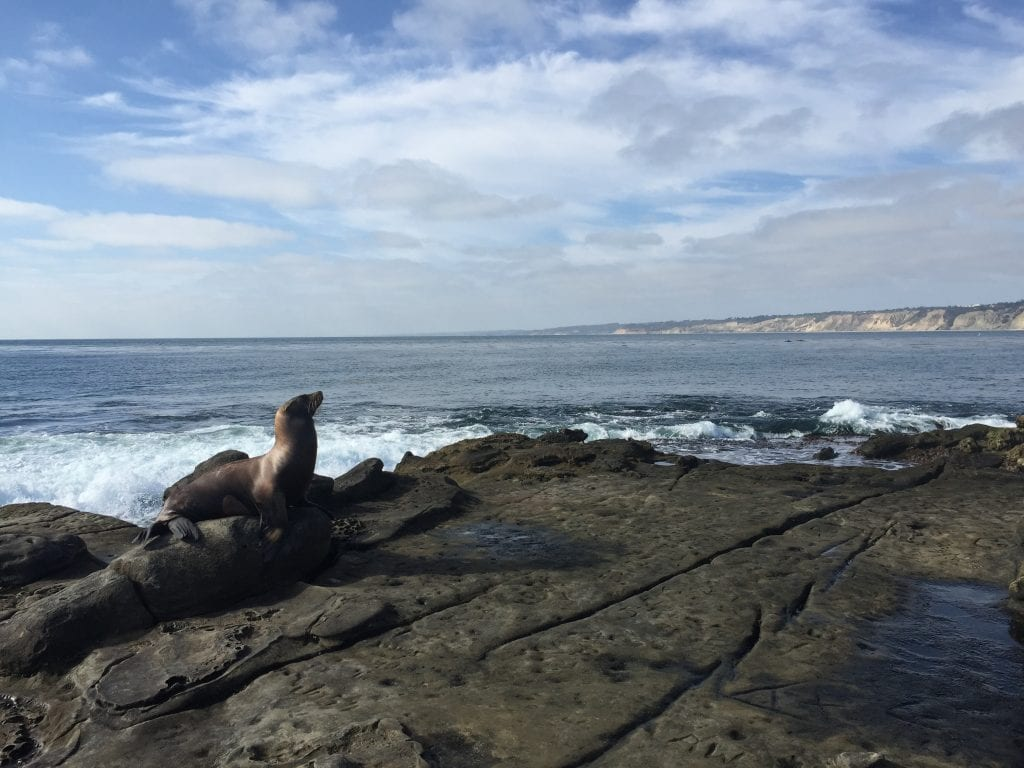 La Jolla Cove - Things to do in San Diego with Kids