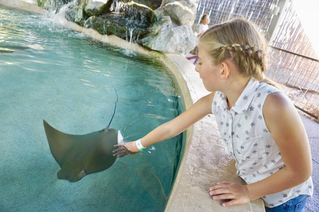 Sting Ray Exhibit at Phoenix Zoo