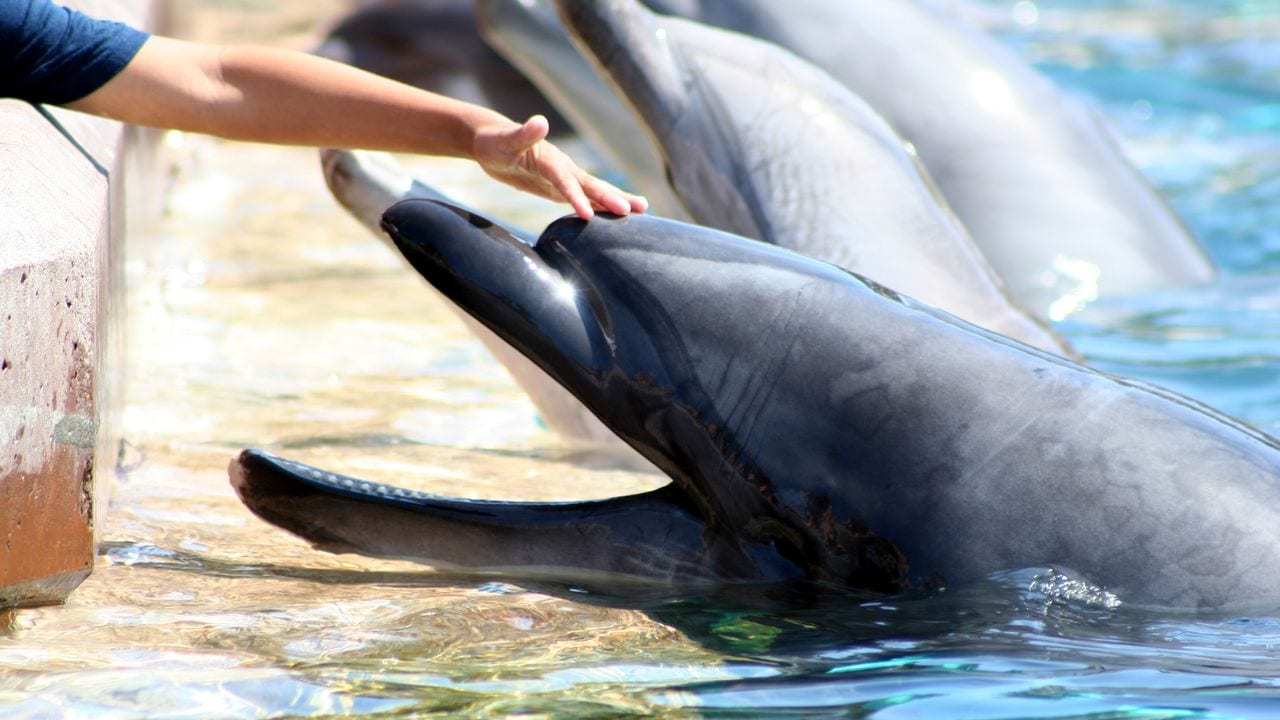 Sea World Tips & Tricks To Make Your Day a Breeze!