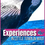 With a little place like Lahaina, the possibilities for keeping busy are really endless. With so many top things to do in Lahaina, you and your guests, whether your family or friends, will be entertained 24/7! Every year the munchkins and I head to Maui and always spend at least one day in Lahaina. This cute little town is filled with plenty of fun activities for the whole family to enjoy.
