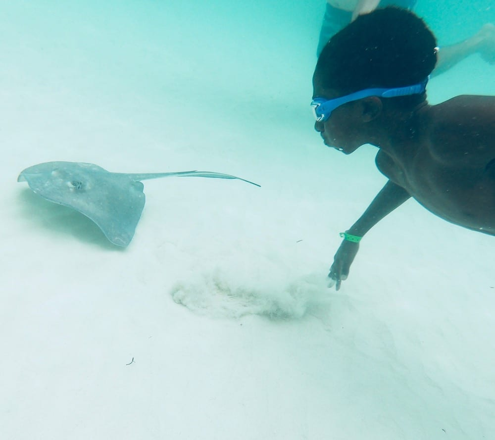 Stingray City Tours Grand Cayman – An Extraordinary Shore Excursion
