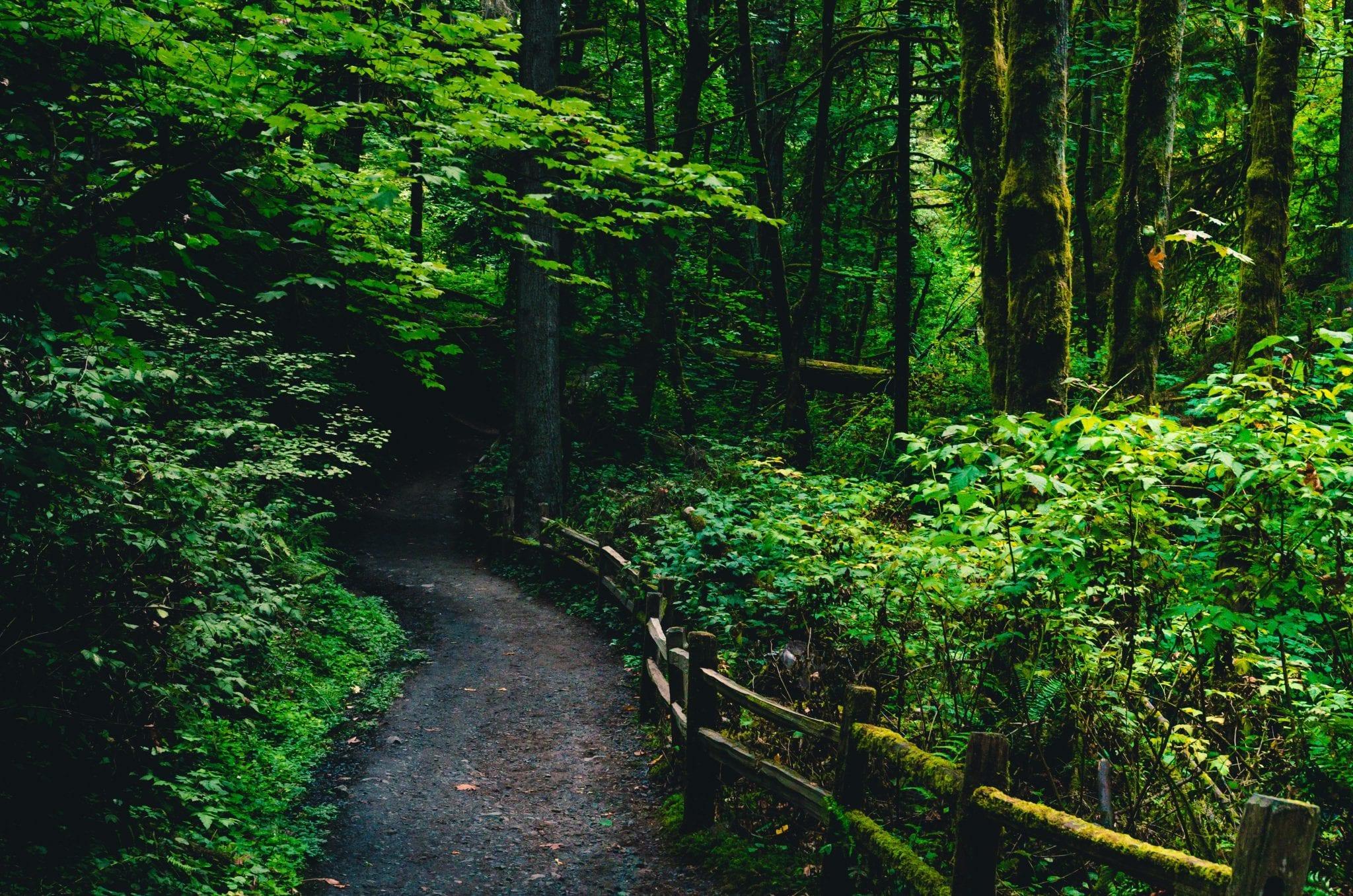 Best Portland Hikes - Hoyt Arboretum