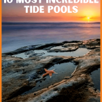 San Diego Tide Pools; Guide to the Most Incredible 10! Sunny San Diego has more to offer than just looks! Pay a visit to the unique critters and plants tucked away in the crevices of their amazing tide pools. #sandiego #tidepools #visitsandiego #traveltips