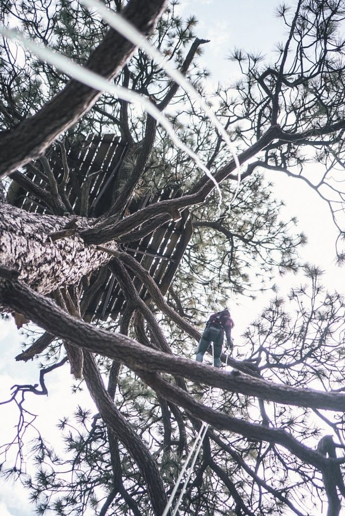 Rappeling from a Pine tree at Pacific Crest