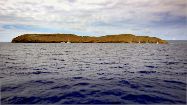things to do in maui with kids - snorkel molokini
