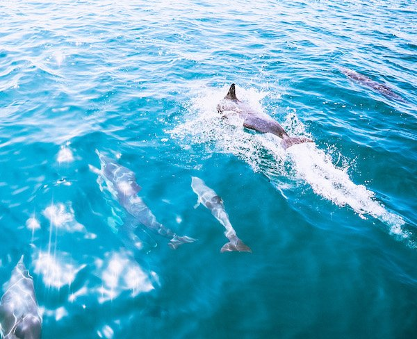 thinfs to do in dana point - dolphin cruise