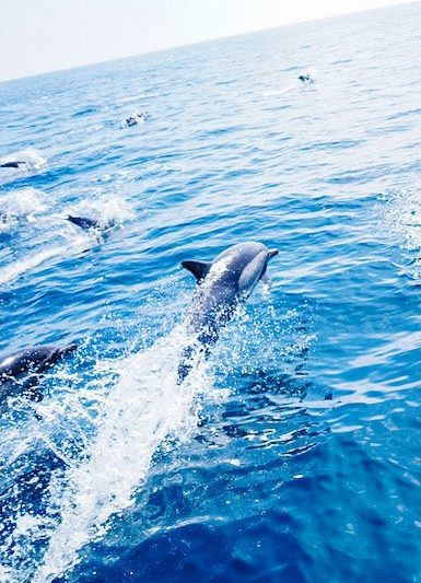 dave's dolphin cruis