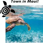 secret turtle town in maui