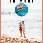 Have you ever witnessed wild sea turtles so close you could touch them? Well, at the secret spot I have discovered you can do just that. I like to call it Turtle Town Maui, a place where you can see numerous sea turtles and never have to be in more than knee-deep water.