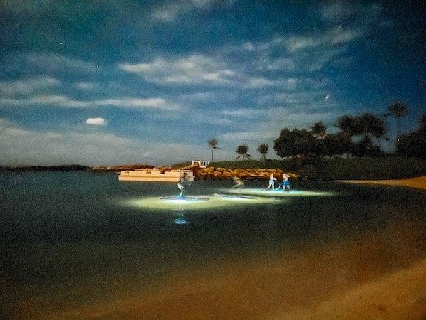Night Glow Paddle